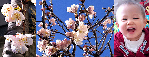 3月16日初開花